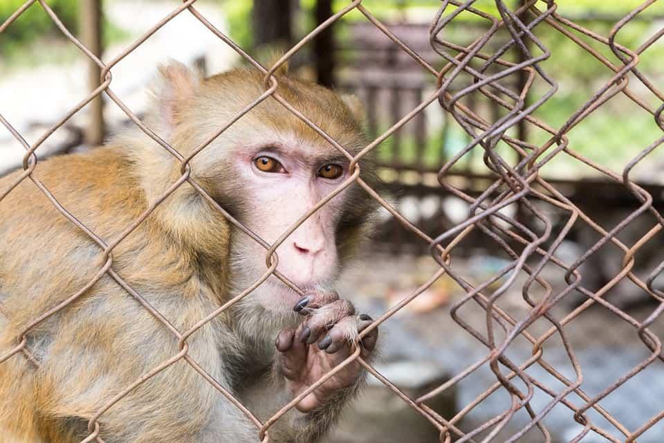 monkey mind en meditatie