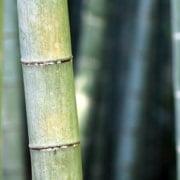 bamboe en zen