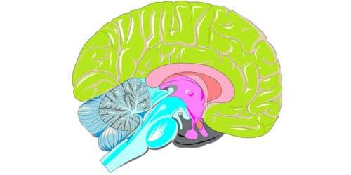 Het brein verandert als je klaagt