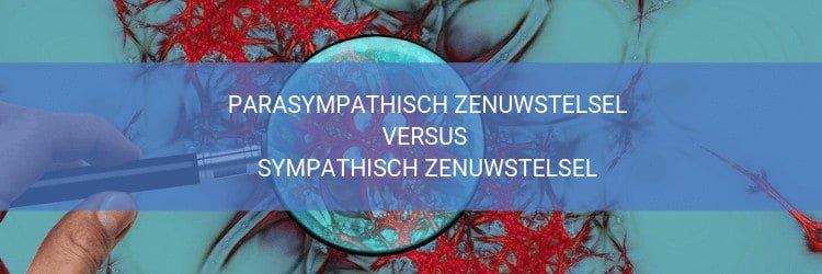 Sympathisch versus parasympathisch zenuwstelsel